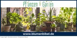 Online-Magazin blumenbibel.de